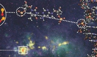 An international group of scientists has detected for the first time the prebiotic molecule PO in star-forming regions. This molecule plays a key role in the double helix structure of DNA, and is therefore directly linked to the origin of life in the Universe.