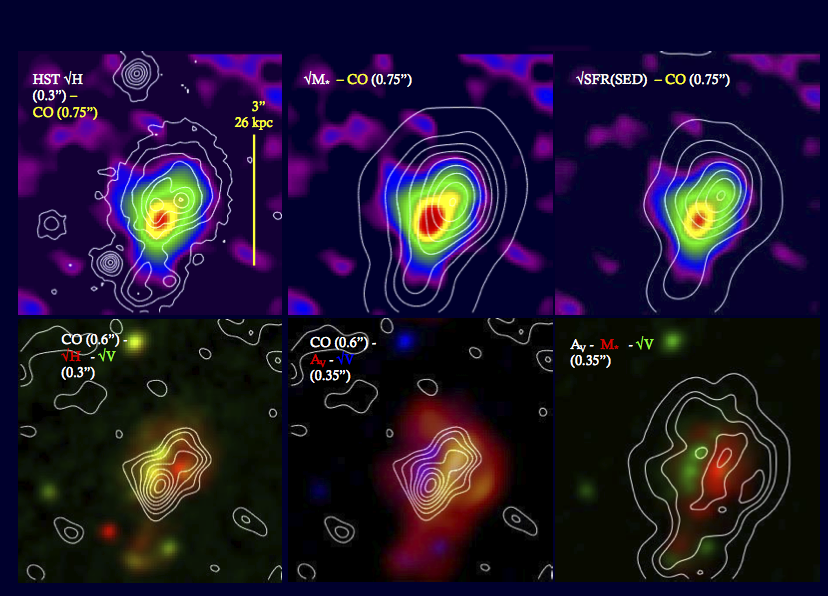 In the top row, the molecular gas is shown as the backdrop image in color and the contours display the stellar light (from left to right: H band map, stellar mass, extinction corrected star formation rate). In the bottom row (center image), the backdrop shows the extinction and the white contours show the CO integrated flux map -- demonstrating how well the absorption seen in the rest-frame optical coincide with the CO emission. The high-resolution HST H-band maps show clumps of star formation, typical for galaxies at the peak of the cosmic star formation rate (see results from the high-redshift galaxy survey SINS)