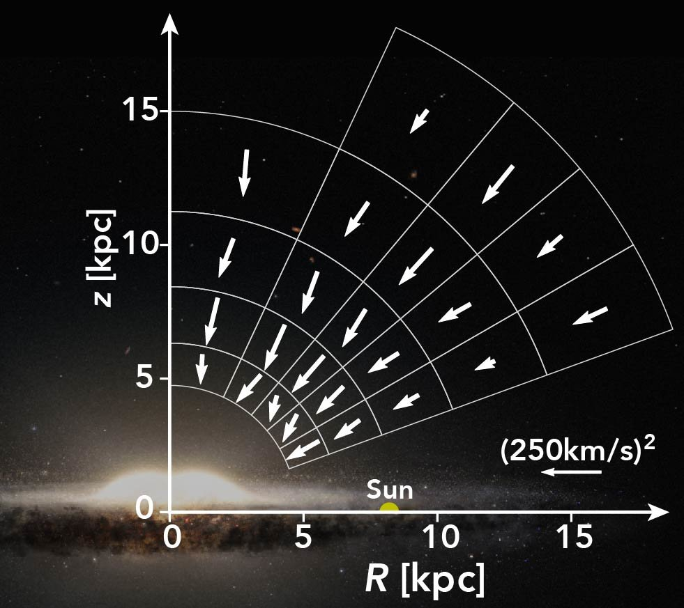 The Milky Way's Gravitational Force Field Measured from RR Lyrae in Gaia